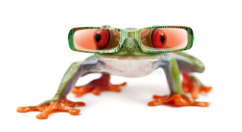 Красно-наблюданное Treefrog, callidryas Agalychnis нося солнечные очки стоковые фотографии rf