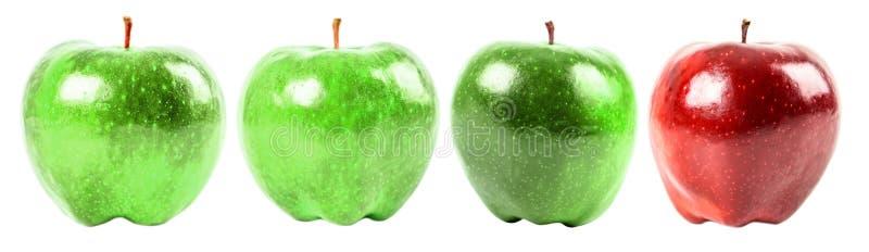 Красно- очень вкусное Яблоко среди зеленых яблок стоковые фото