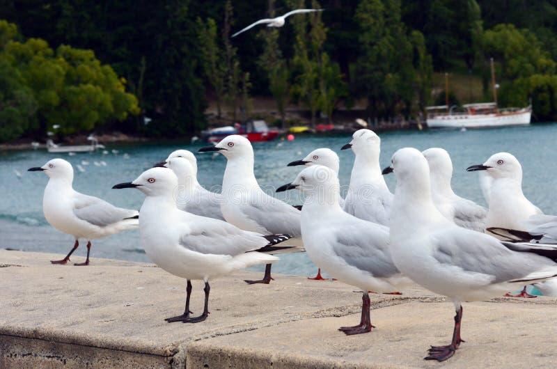 Download Красно-представленная счет чайка Стоковое Изображение - изображение насчитывающей экологичность, красно: 37927625