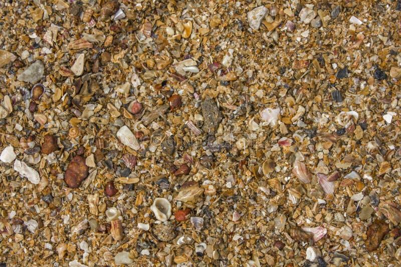 Красные белые желтые голубые небольшие части seashells естественная поверхностная текстура стоковое изображение