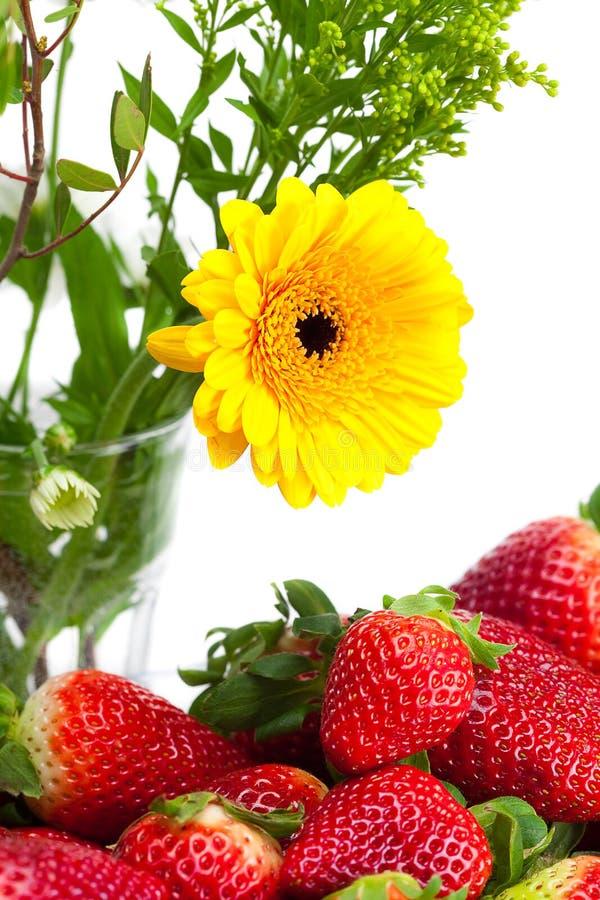 Красные большие сочные зрелые клубники и цветок стоковые фотографии rf