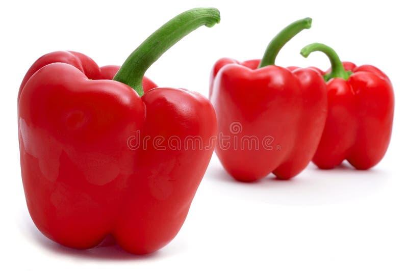 Красные болгарские перцы стоковые изображения rf