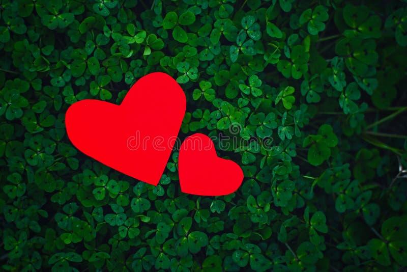 Красные бумажные сердца в зеленом клевере стоковое изображение