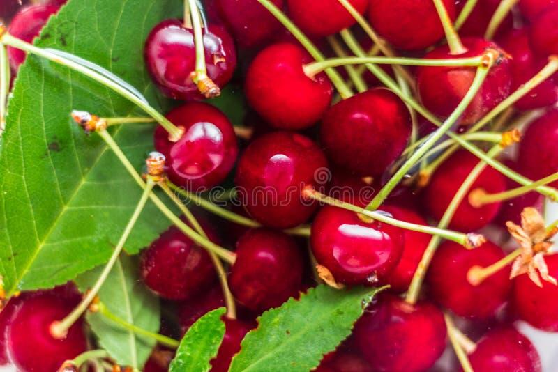 Красные вишни в воде с зелеными листьями стоковые фото