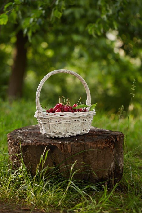 Красные вишни в корзине стоковое фото