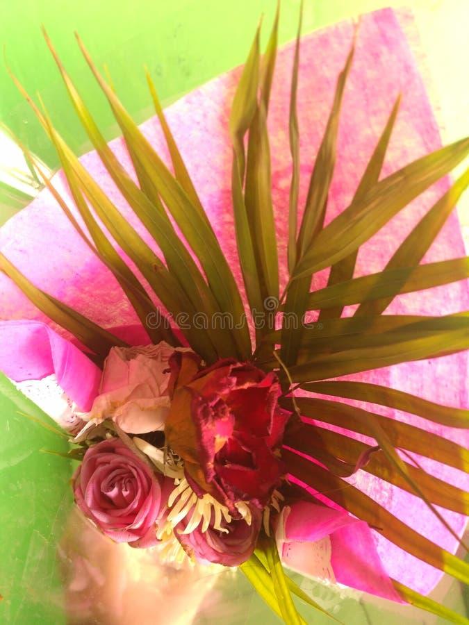 Красные вянуть цветки стоковые изображения rf