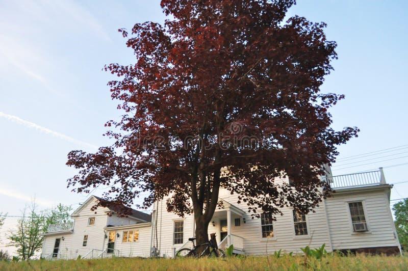 Красные деревья, Белый Дом и голубое небо стоковое изображение