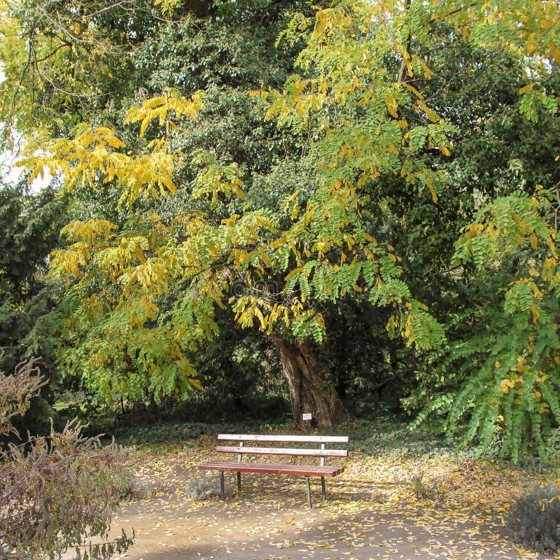 Красные деревянные скамьи в ботаническом саде парка Arad County - Румынии Macea dendrological стоковая фотография
