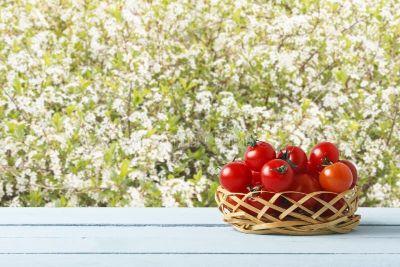 Красные зрелые томаты вишни на плетеной корзине в саде Деревянный стол на предпосылке деревьев с цветками Взгляд со стороны скопи стоковые фотографии rf