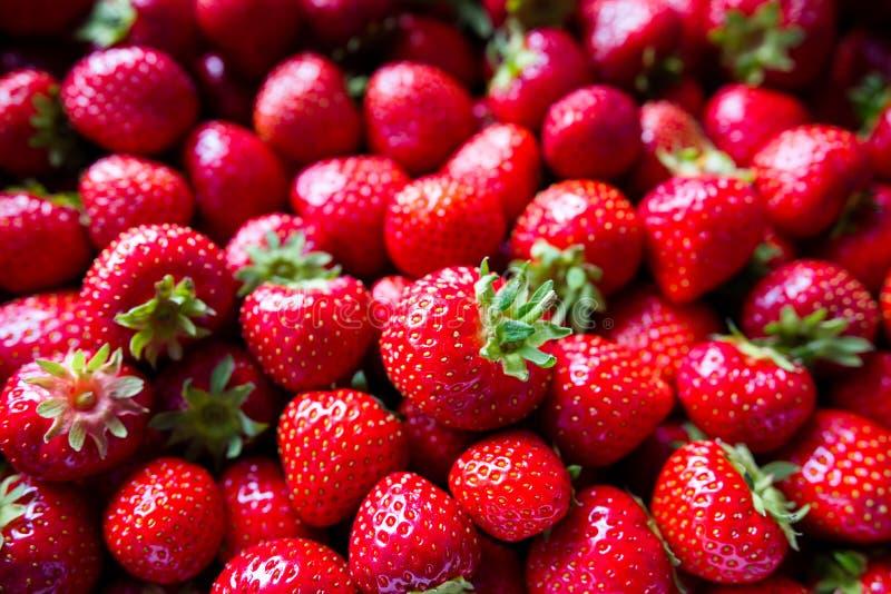 красные зрелые клубники стоковые фотографии rf
