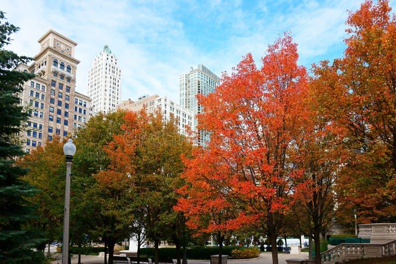 Красные листья осени, Чикаго стоковые изображения