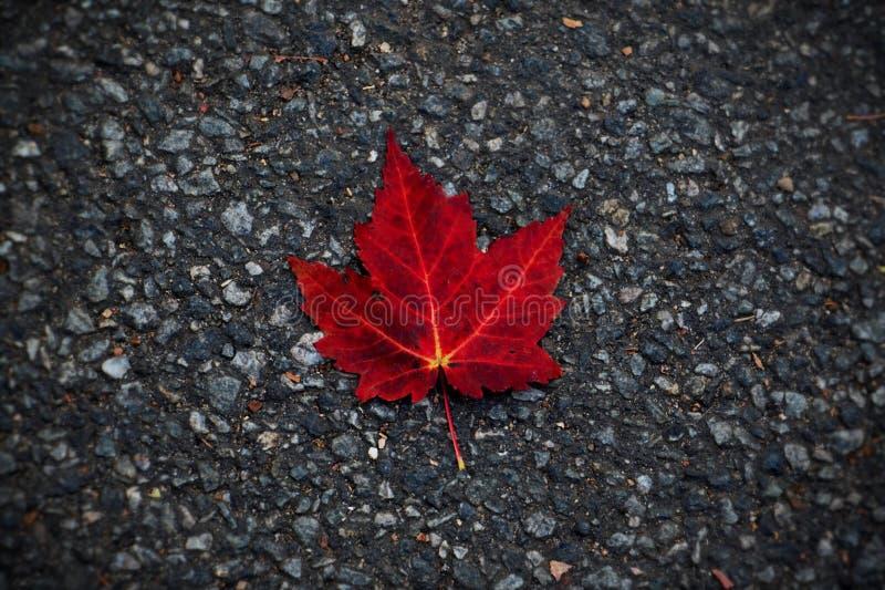 Красные листья стоковые изображения