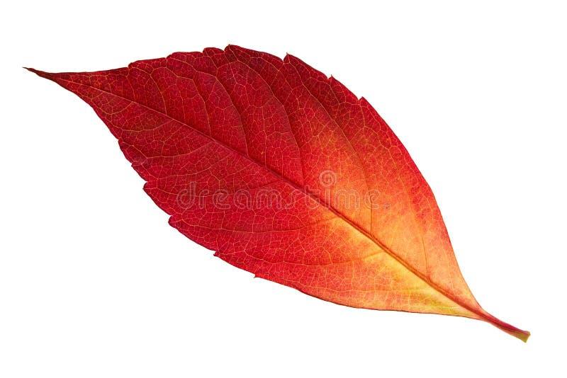 Красные лист осени стоковая фотография