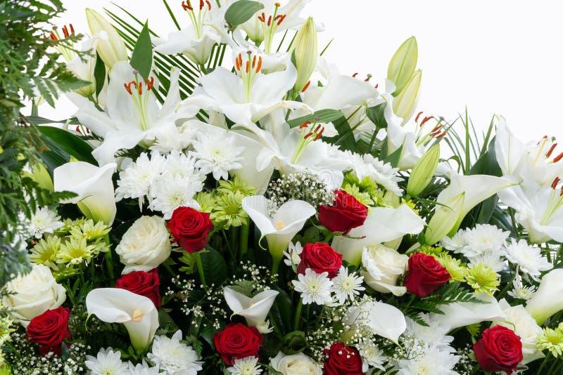 Красные и белые цветки на белой предпосылке, космосе экземпляра, месте для текста стоковое изображение