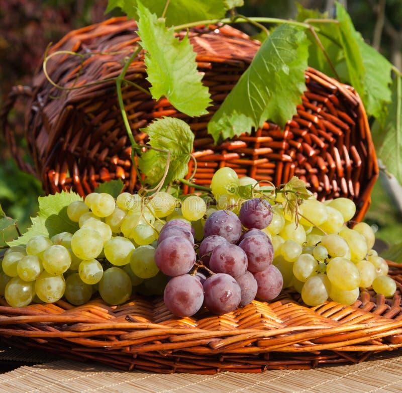 Красные и зеленые виноградины на Wicker стоковые изображения