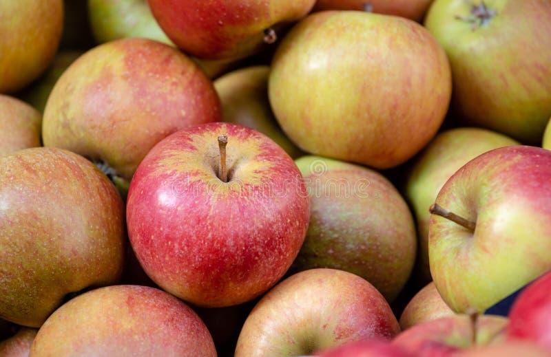Красные и зеленые яблоки штабелируют, здоровый и свежие продукты, для диеты и vegan Картина предпосылки и природы стоковое фото