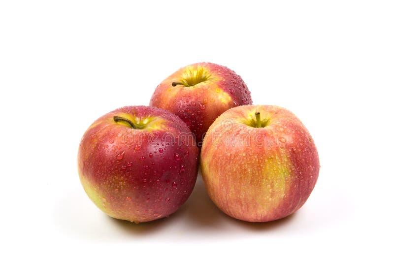 Красные и розовые яблоки с падениями воды изолированные на белом земледелии еды и напитка предпосылки стоковые изображения