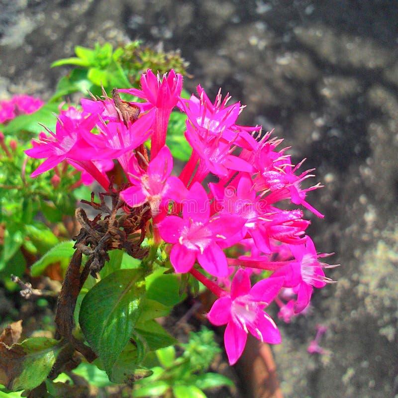 Красные красивые цветки стоковые фотографии rf