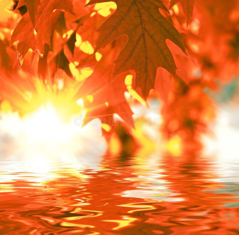 Красные листья осени стоковые изображения rf