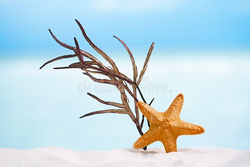 Красные морские звёзды с океаном, пляжем с белым песком, небом и seascape стоковые изображения rf