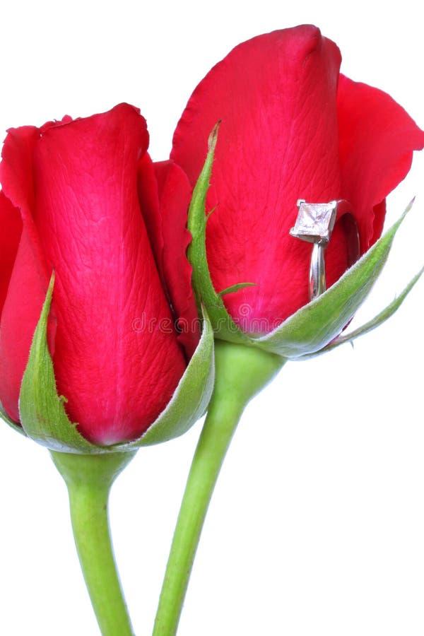 красные розы кольца стоковая фотография rf