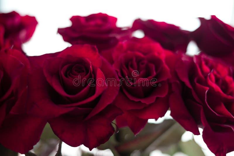 Красные розы на запачканной предпосылке стоковая фотография