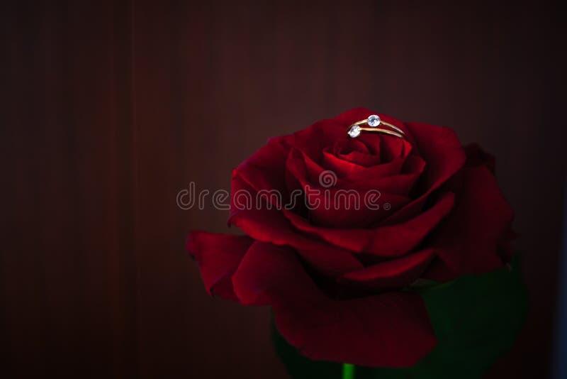 Красные розы на предпосылке пирофакела солнца стоковое изображение