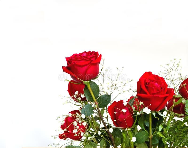 красные розы размечают текст стоковая фотография rf
