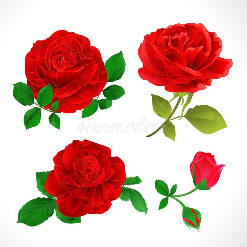 Красные розы с бутонами и листьями винтажными на белой предпосылке установили иллюстрацию 2 векторов editable бесплатная иллюстрация