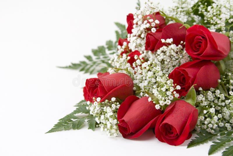 Download красные розы стоковое фото. изображение насчитывающей изолят - 492530