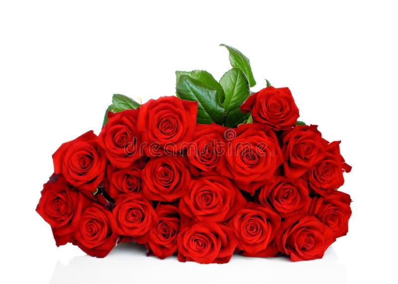 красные розы стоковое изображение