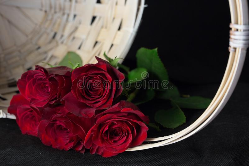 красные романтичные розы стоковое изображение