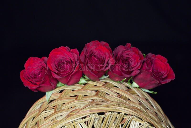 красные романтичные розы стоковые фото