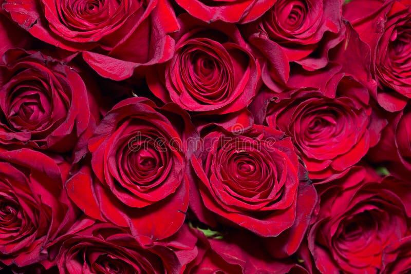 красные романтичные розы стоковое изображение rf
