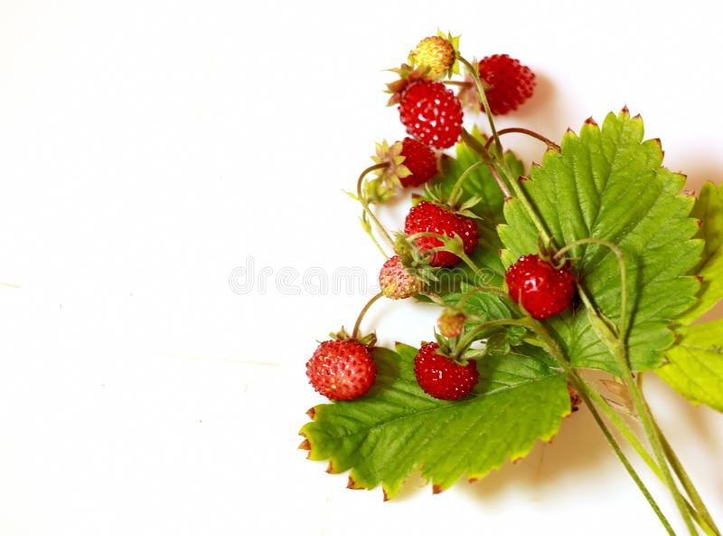 Красные свежие ягоды с зелеными листьями на белой предпосылке стоковое изображение
