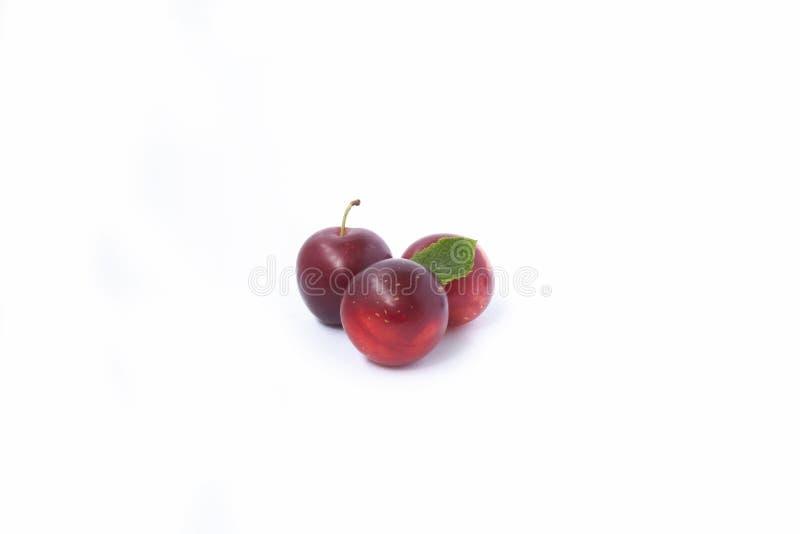 Красные сливы на белизне стоковые изображения rf