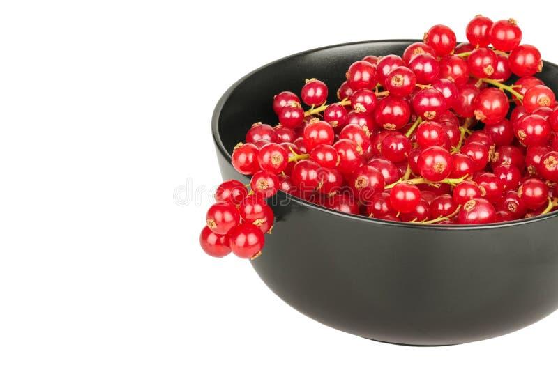 Красные смородины в черном шаре на белом конце предпосылки вверх стоковое изображение