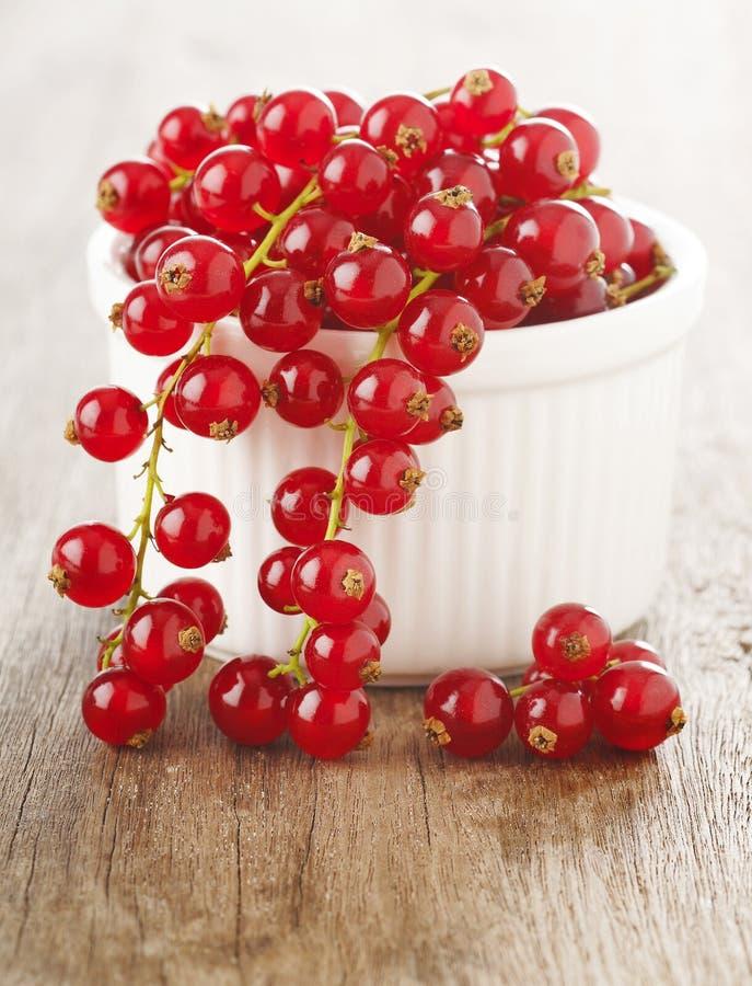 Красные смородины в белом шаре стоковые изображения rf