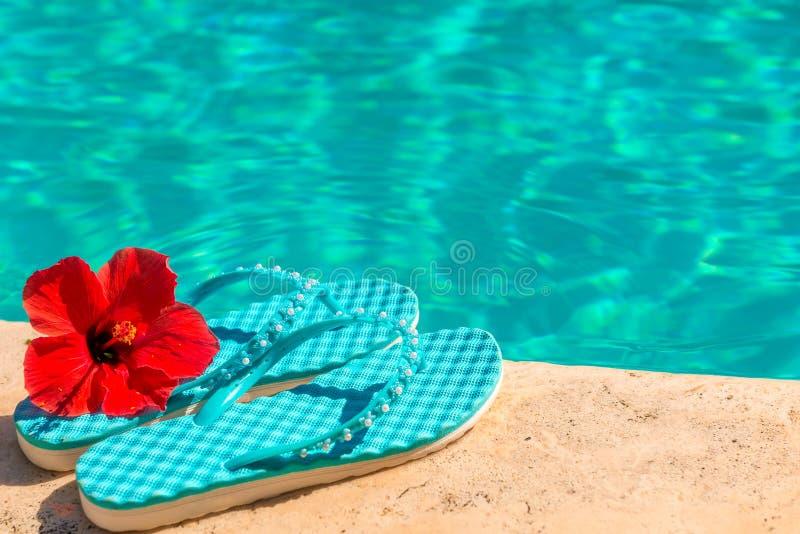 Красные темповые сальто цветка и сальто стоковое фото