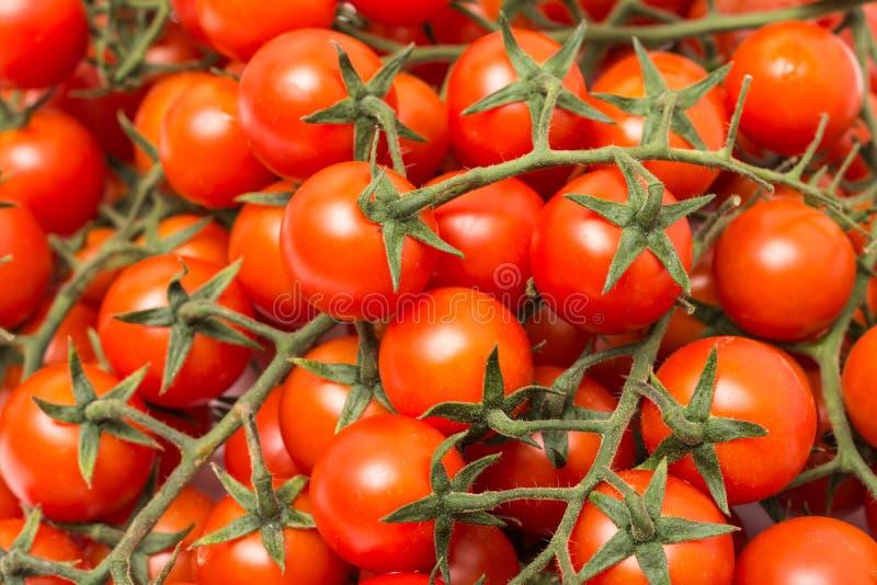 Красные томаты вишни на зеленой лозе стоковые фотографии rf