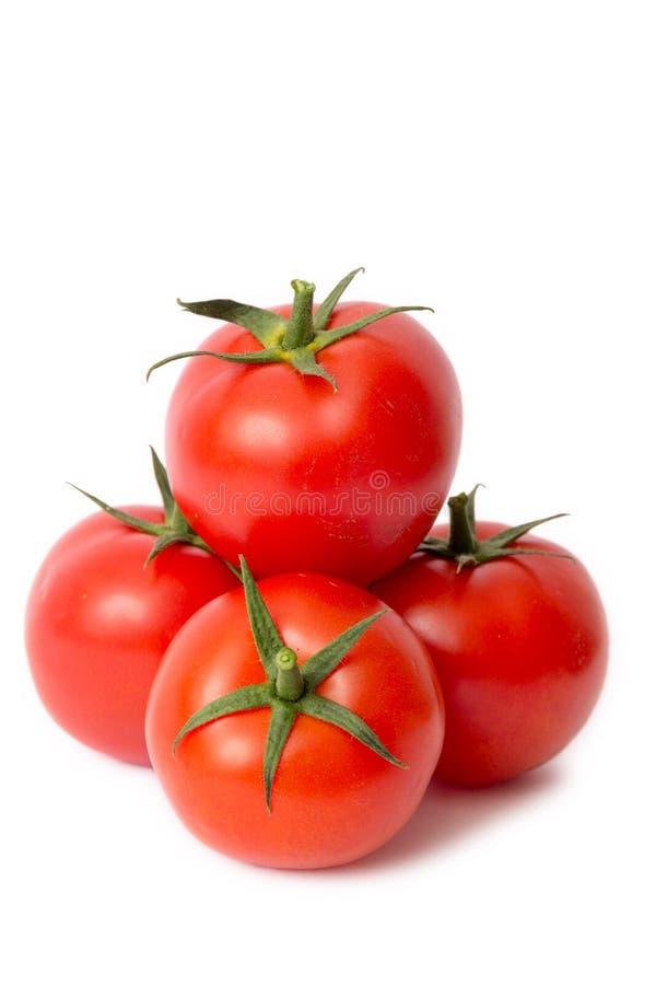 Красные томаты изолированные на белой предпосылке стоковые фото