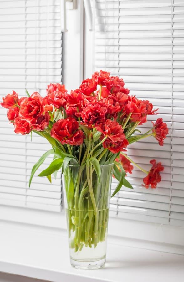Красные тюльпаны в стеклянной вазе на windowsill стоковая фотография rf