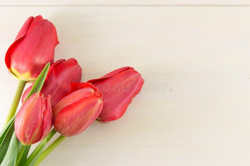 Красные тюльпаны на белой деревянной доске стоковые фотографии rf