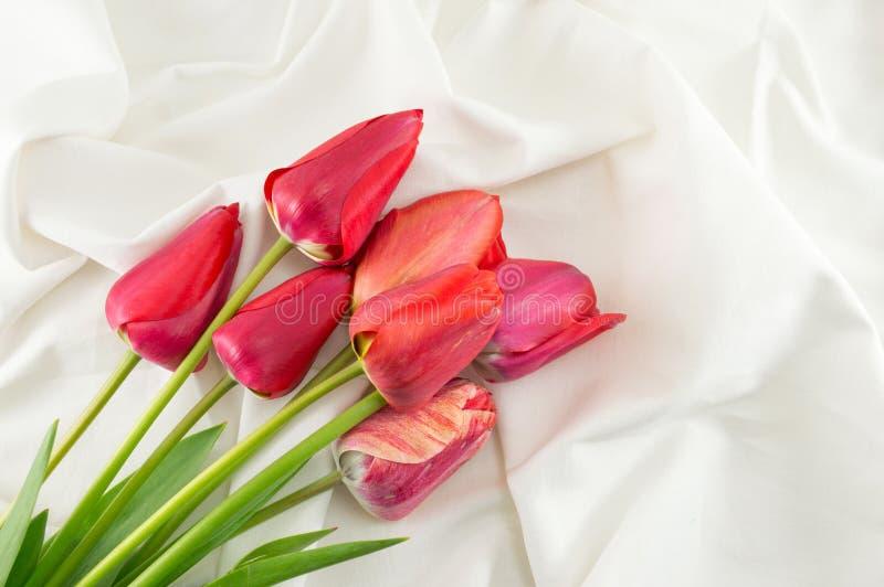 Красные тюльпаны на белой ткани стоковая фотография rf