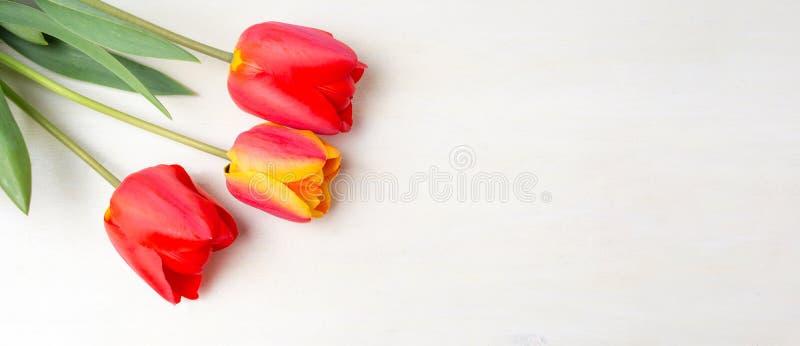 Красные тюльпаны на белом деревянном столе стоковое изображение