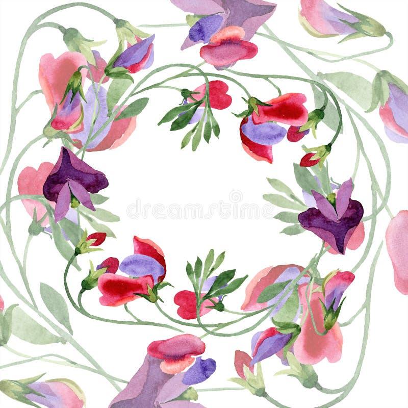 Красные цветки сладкого гороха Wildflower лист весны Набор иллюстрации предпосылки акварели Венок рамки флористический иллюстрация штока