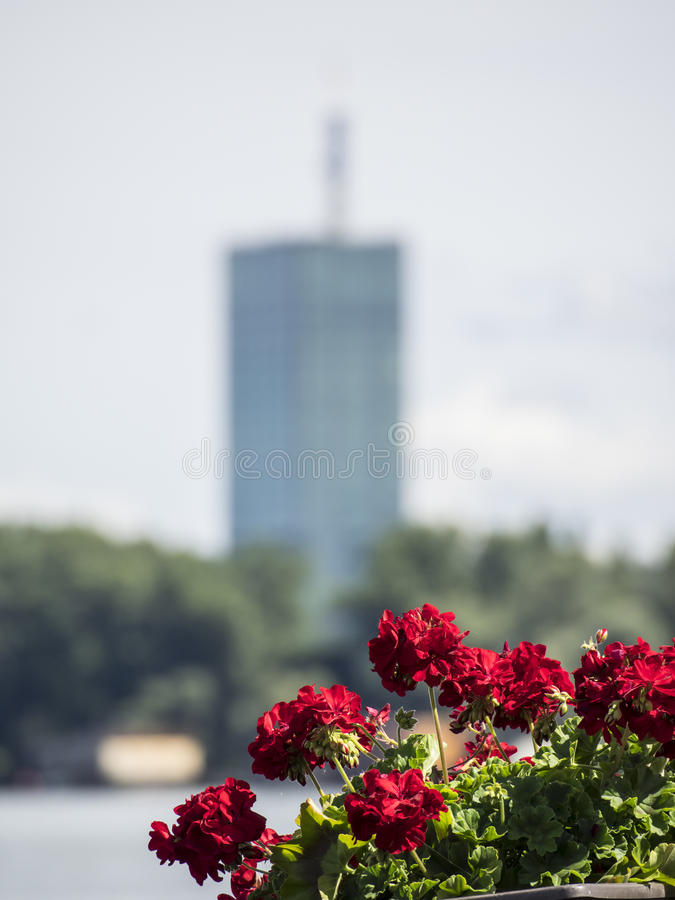 Красные цветки с небоскребом стоковое фото rf