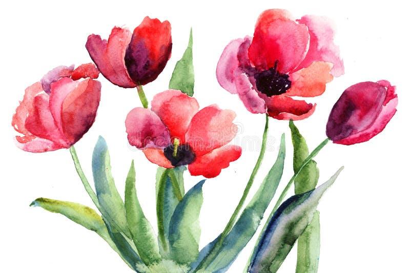 Красные цветки тюльпанов Стоковая Фотография