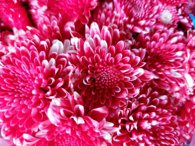 красные цветки хризантемы во флористическом букете для подарка любов, предпосылки и текстуры стоковое изображение rf