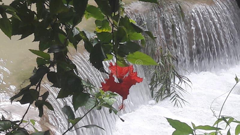 Красные цветок и водопад стоковая фотография rf